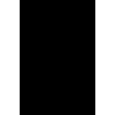 Palma 006