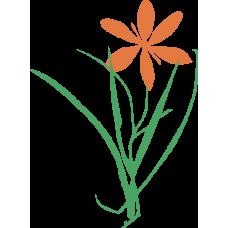 Rostlina 12