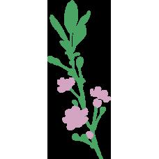 Rostlina 13