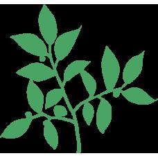 Rostlina 14