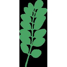 Rostlina 15
