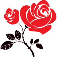 Růže - dvoubarevná