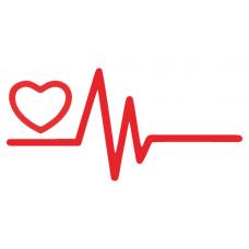 EKG a srdce 2