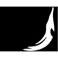 Delfín 005