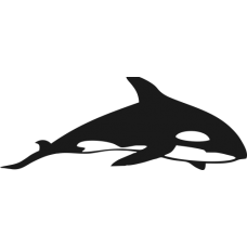 Žralok 010