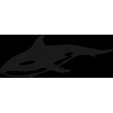 Žralok 011