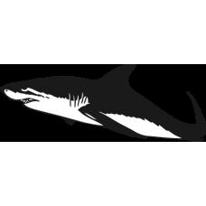Žralok 012