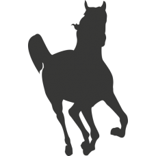 Kůň 016