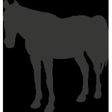 Kůň 017