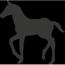 Kůň 018