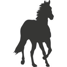 Kůň 019