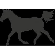 Kůň 020