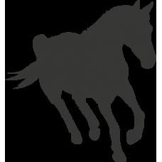 Kůň 021