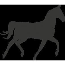 Kůň 022