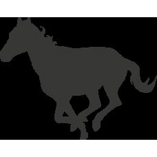 Kůň 023