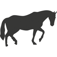 Kůň 024