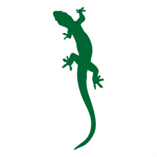Gekon (3 - 6 ks)