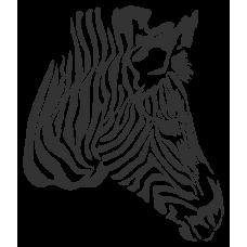 Zebra - hlava