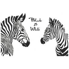 Zebry - Black and White